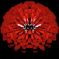 Red Abstract Flower One by Heather Joyce Morrill