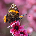 Red Admiral Butterfly by Brian Tada
