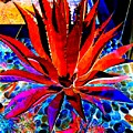 Red Agave by Randall Weidner