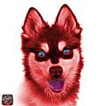 Red Alaskan Klee Kai - 6029 -wb by James Ahn