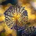 Red Allium Flower by Evgeny Parushin