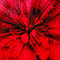 Red And Black Explosion by Susan Capuano