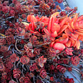 Red And Burgundy Succulent Plants by Sofia Metal Queen