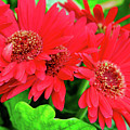 Red And Green by Keith Kadwell