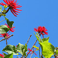 Red And Green San Diego Flowers by Doreen Whitelock