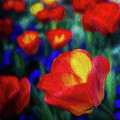 Red And Orange Tulips by Doug Sturgess