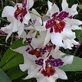 Red And Purple Orchids by Heather Jane