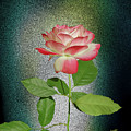 Red And White Rose5 Cutout by Shirley Heyn