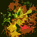Red And Yellow Flowers Abstract by Lenore Senior
