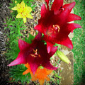 Red And Yellow Garden Flowers by Marty Malliton