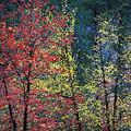 Red And Yellow Leaves Abstract Horizontal Number 1 by Heather Kirk