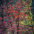 Red And Yellow Leaves Abstract Vertical Number 1 by Heather Kirk