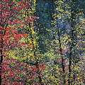 Red And Yellow Leaves Abstract Vertical Number 2 by Heather Kirk