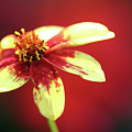 Red And Yellow by Mary Haber