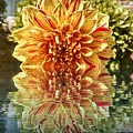 Red And Yellow Reflection by Steven Wills