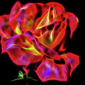 Red And Yellow Rose Fractal by Tracey Everington