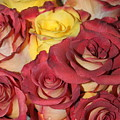 Red And Yellow Roses by Lauri Novak