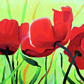 Red Anemonies by Chris Torre