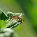 Red Ant On Leaf by Barbara Treaster