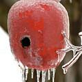 Red Apple Birdhouse