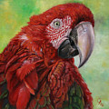 Red  Ara Chloropterus Macaw by Svetlana Ledneva-Schukina