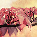 Red Autumn Day by Angela Doelling AD DESIGN Photo and PhotoArt