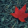 Red Autumn by Ignacio Leal Orozco