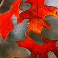 Red Autumn Leaves by Jill Reger