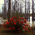 Red Azaleas In The Swamp by Susanne Van Hulst
