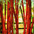 Red Bamboo by Eluv