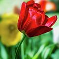 Red Beauty by Susan Warren
