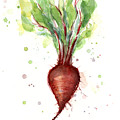 Red Beet Watercolor by Olga Shvartsur