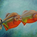 Red Bellied Fish by Angeles M Pomata