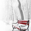 Red Bench In The Snow by  Jaroslaw Grudzinski