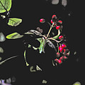 Red Berries And Foliage by David Frederick