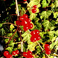 Red Berries And Ivy by Beth Akerman