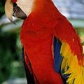 Red Bird by LeeAnn Alexander