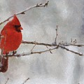Red Bird Of Winter by Jeff Kolker