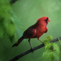 Red Bird On A Hot Day by Lois Bryan