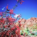 Red Bloom by Anna Jasper
