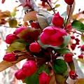 Red Blossom  by Mioara Andritoiu
