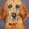Red Bone Coon Hound by Becky Christenson