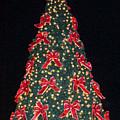 Red Bow Tree by Ellen Barron O'Reilly