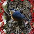 Red Breasted Nuthatch 2 by Ben Upham III