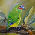 Red Browed Fig Parrot  by Cynthia Farr