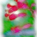 Red Buckeye by Judi Bagwell