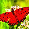 Red Butterfly by Leonardo Digenio