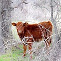 Red Calf In Winter Brush by Jeanie Mann