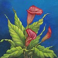 Red Calla Lillies by Carol Sabo