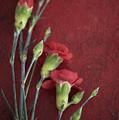 Red Carnation Stems by Di Kerpan